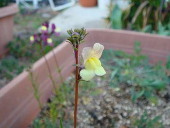 090315黄色い花.JPG